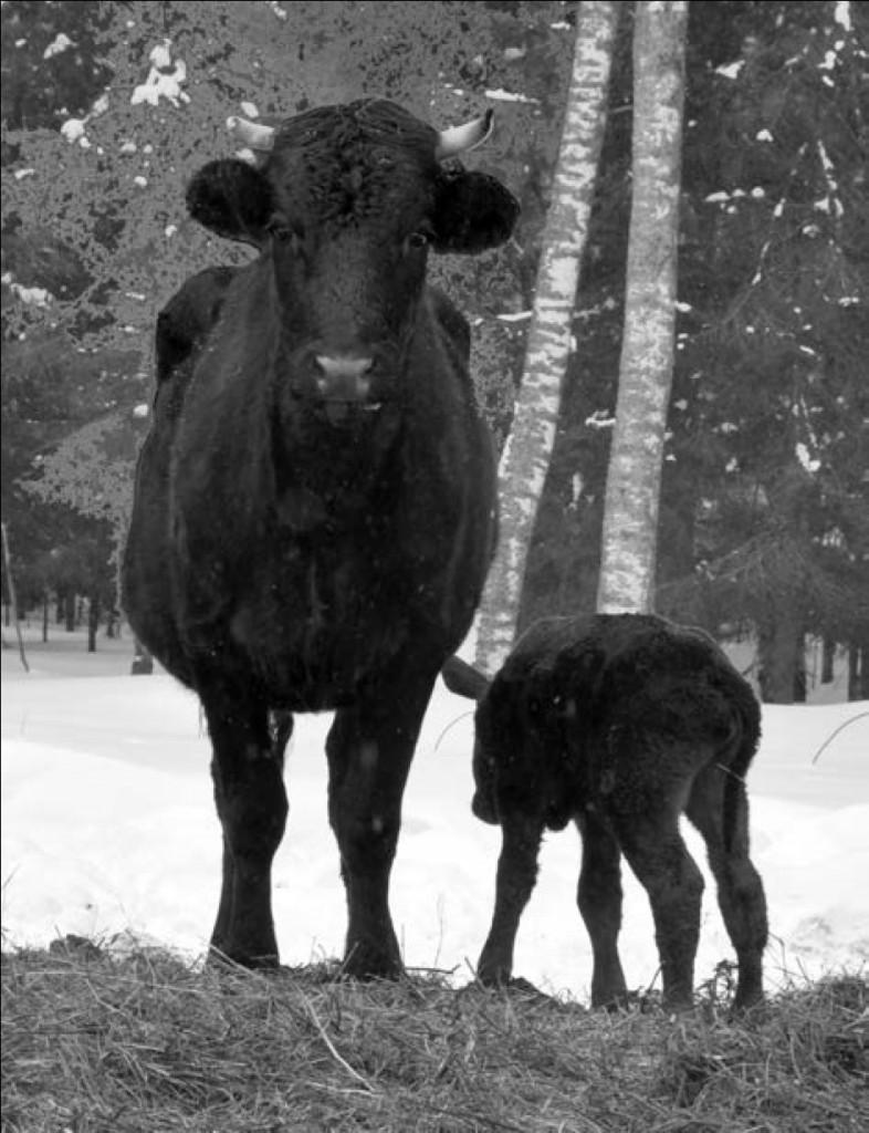 Рис. 10. Мать с новорожденным, родившимся в начале марта.