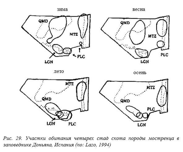 Рис. 29. Участки обитания четырех стад скота породы мостренца в заповеднике Доньяна, Испания (по: Lazo, 1994)